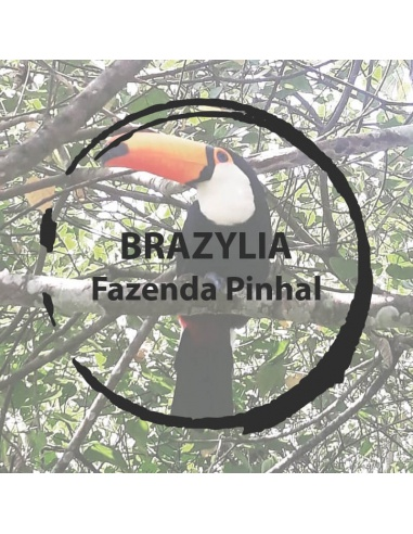 Brazylia Fazenda Pinhal
