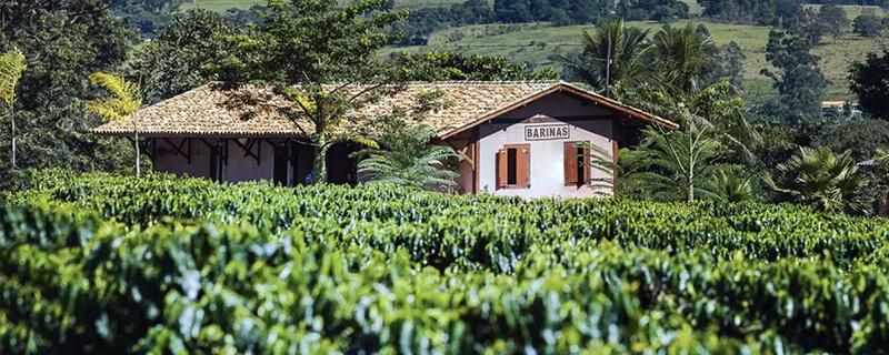 Brazylia Fazenda Barinas